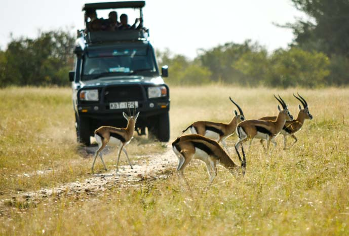 12 Days best of Kenya Safari Experience