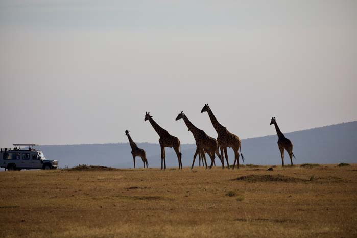 11 Days Highlights of Kenya Safari and Beach Experience